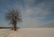 Bieg Sasinów, Narty biegowe, Mazury